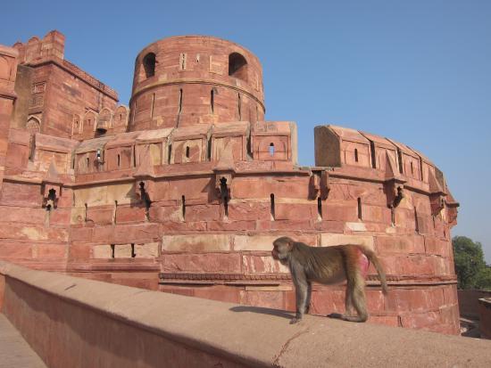 Taj Mahal Trip From Mumbai