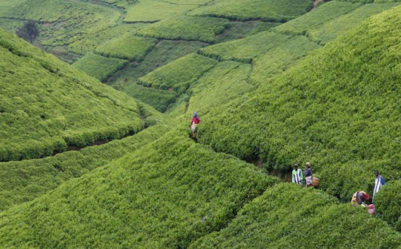 Darjeeling 8 Days Tour