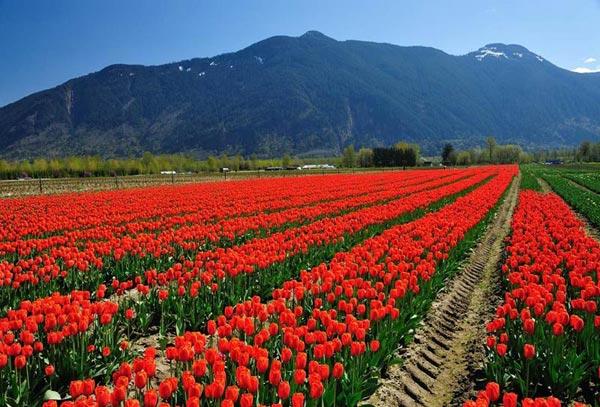 Enchanting Kashmir 6 Days Package