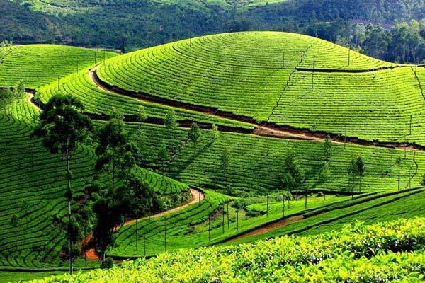 Mysore - Ooty - Kodaikanal Package