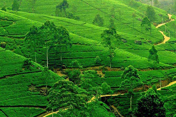 Cultural Highlights Of Sri Lanka 6N/7D Package