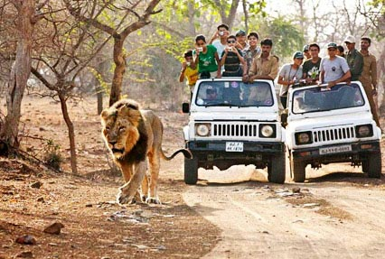 Ayurveda And Wildlife Tour 7N/8D