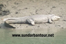 Sundarban Tiger Reserve Package
