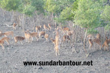 Sundarban National Park Tour