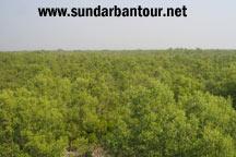 Sundarban Nature Package Tour