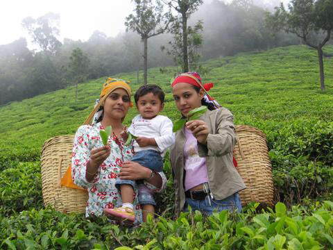 Make My Trip Tours For Banglore - Mysore - Ooty