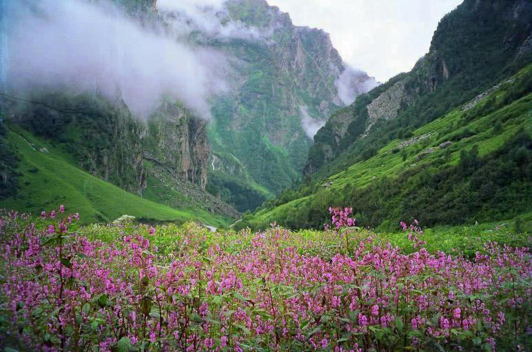 Valley Of Flowers Tour