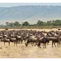 Ultimate Kenya Safari - Budget