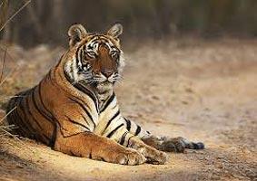 Wild Rajasthan - 6 Nights / 7 Days Tour