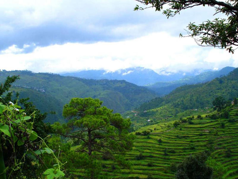 New Delhi - Nainital - Ranikhet - Almora - Kausani - Tour Package