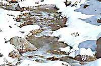 Himachal Mountain Tour