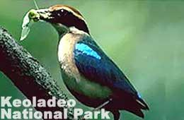 14 Days Keoladeo National Park Tour