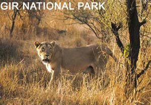 3 Days Gir National Park Tour