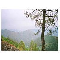 Chandigarh - Manali - Shimla - Parwanoo