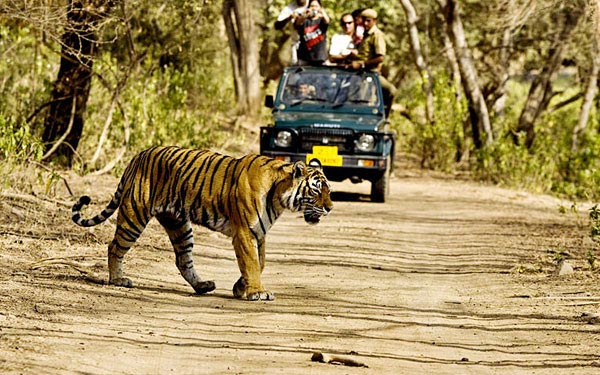 8 Days Golden Triangle Tour With Ranthambore Tiger Safari