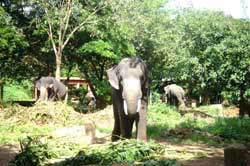 11 Days Wildlife Tour