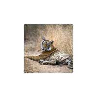 Tiger Tour Of Rajasthan