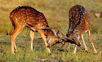 Wildlife & Cultural Tour Of India
