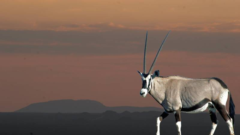 Oryx Safaris Tour