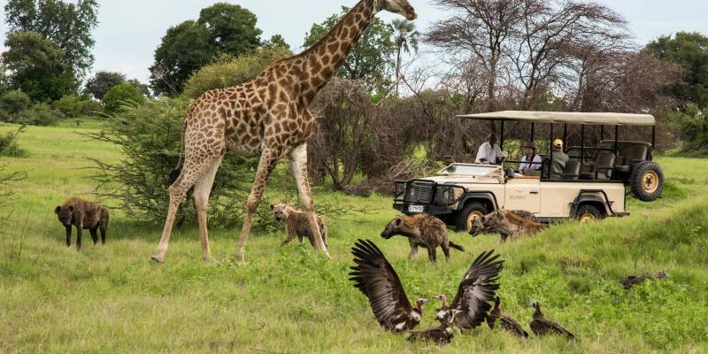 Simba Safaris Tour