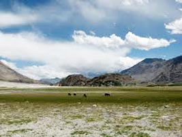 Nubra Valley - Ladakh Tour
