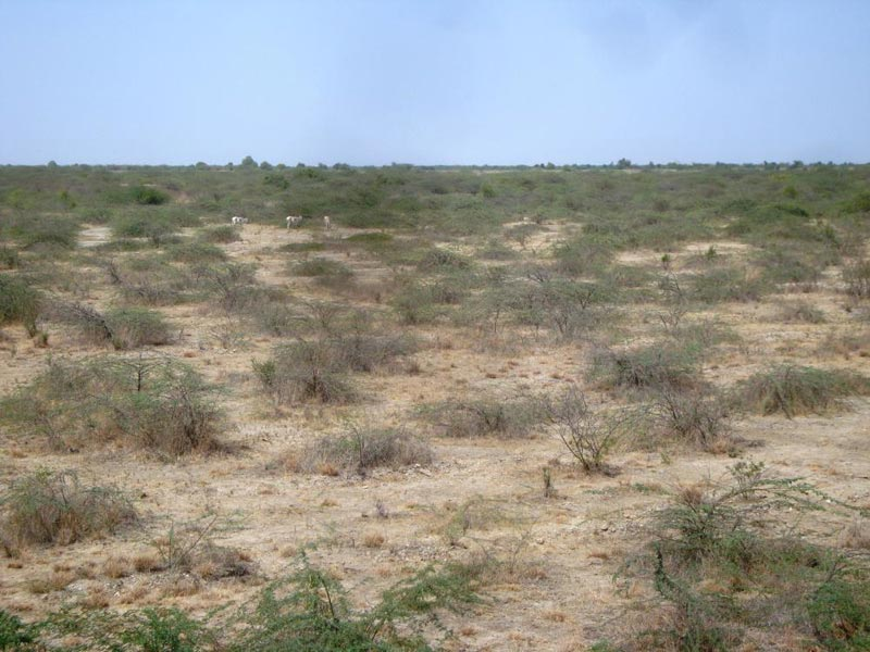 Know-How Of Runn Kutch Tour