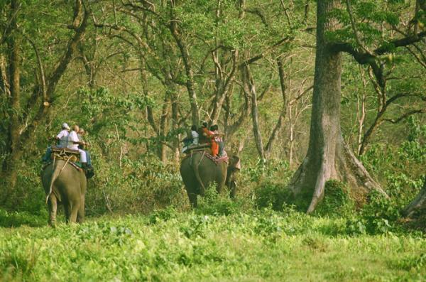 Jungle Safari In Dooars Tour
