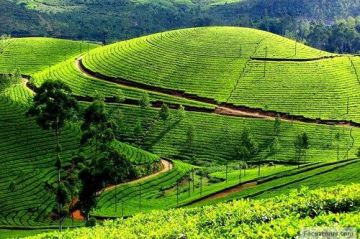 Students Coorg, Mysore And Ooty 7 Days Tour