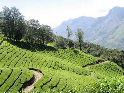 India - Kerala Honeymoon Tours