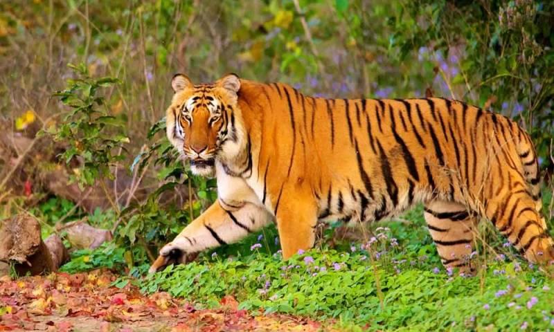 Best Wildlife Tour Package