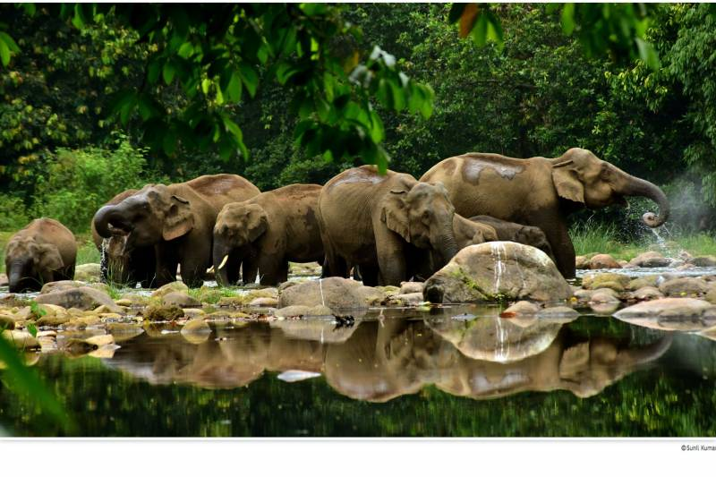 Kerala Wonderful Wildlife Tour