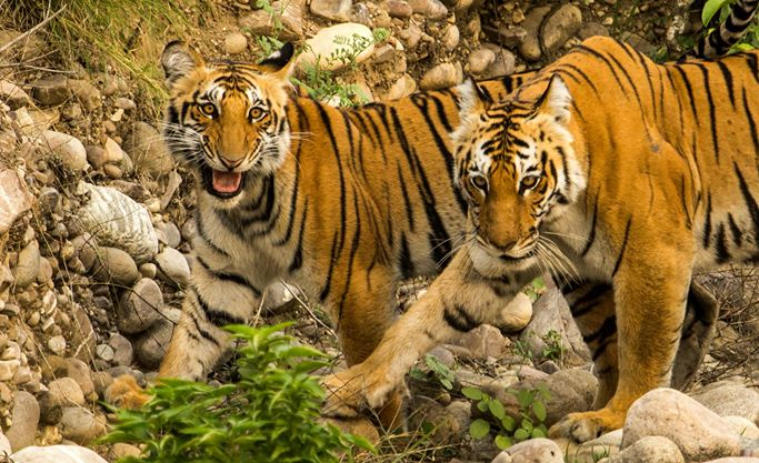 Jim Corbett National Park Tour Package