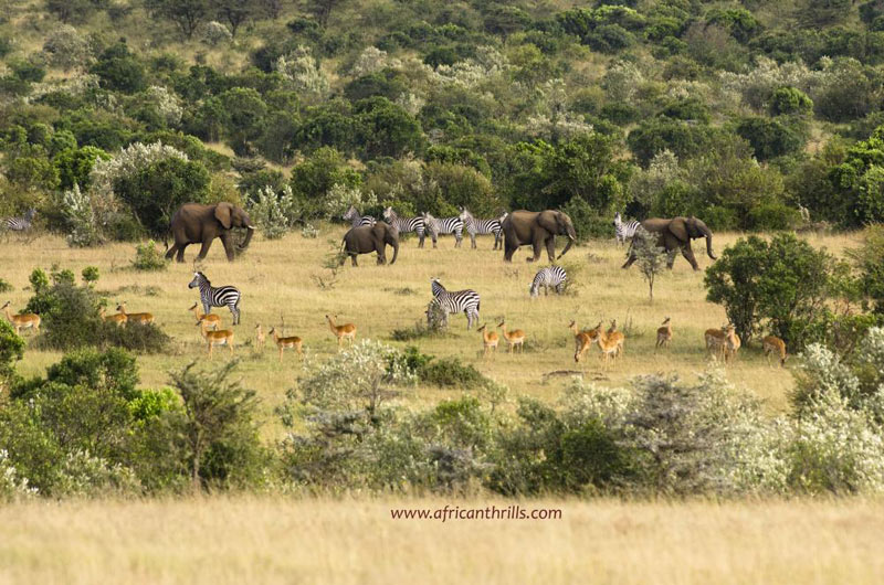 African Adventure Tour