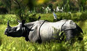 Tour To World Famous One Horned Rhinoceros Home