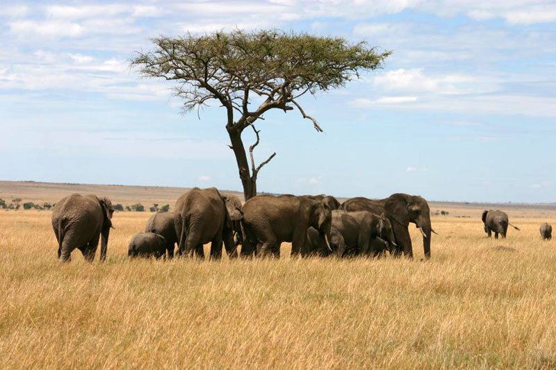 8 Days,7 Nights Nairobi Amboseli,Tsavo East,Tsavo West,Mombasa