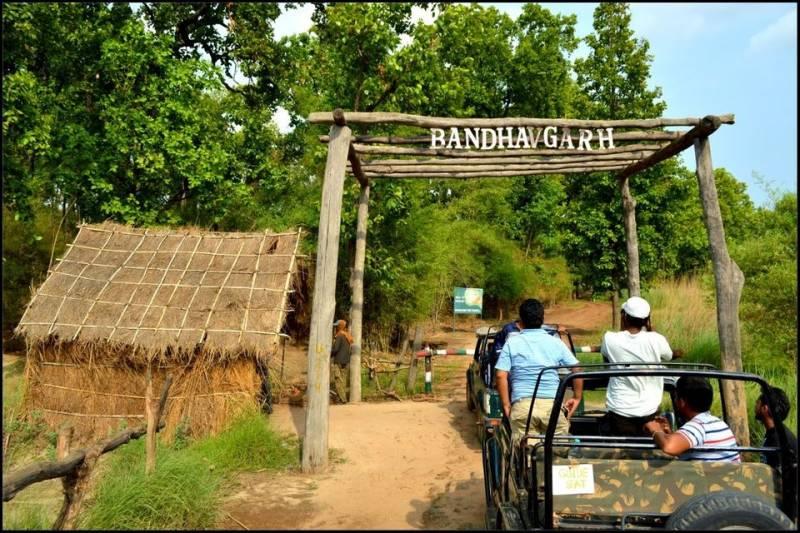 Tour Programme Of Bandhavgarh And Kanha