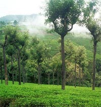 Ooty -  Hill Station - Tamilnadu Tour