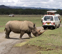 4 Days Masai Mara And Lake Nakuru Camping Joining Safari Tour