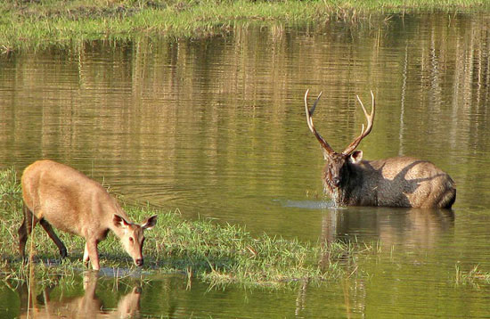 Wild Life In Satpura Tour Package