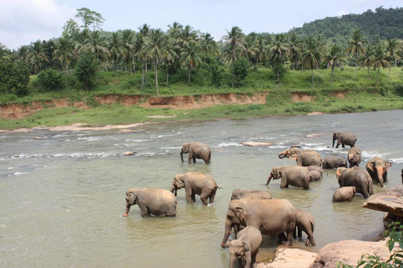 4 Days Tour Package In Sri Lanka.