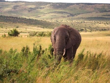 Mara - Nakuru - Samburu - Aberdares - Amboseli - Tsavo West - Nairobi Tour