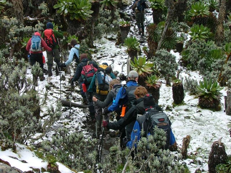 Kibale - Rwenzori Mountains Tour