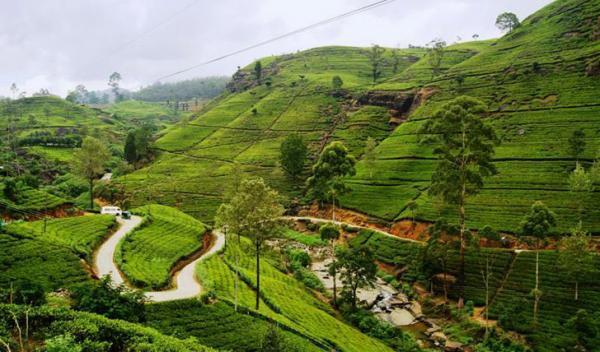 Visiting Kandy - Nuwara Eliya - Colombo Tour
