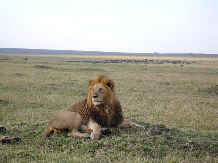 9 Days Kenya Classic Flying Safari Tour
