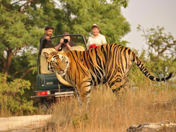 Tiger And Taj Package