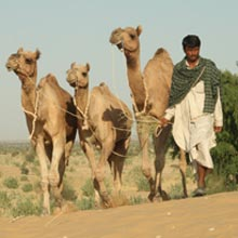 Two Days And One Night Safari Package