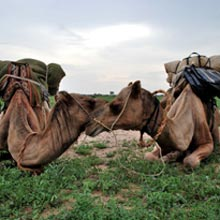 Intercity Camel Tour 2 Nights, Longer Or Shorter On Request Package