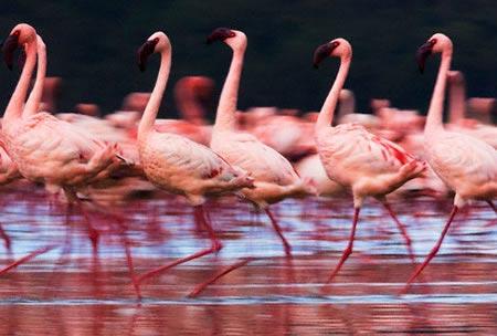 5Days/4Nights Kenya Safari Tour