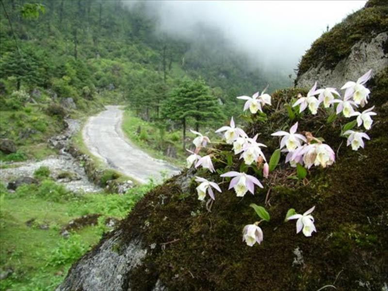 North Sikkim Tour - 3 Days.