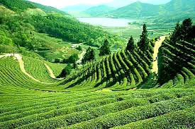 Sikkim And Darjeeling Tour Package